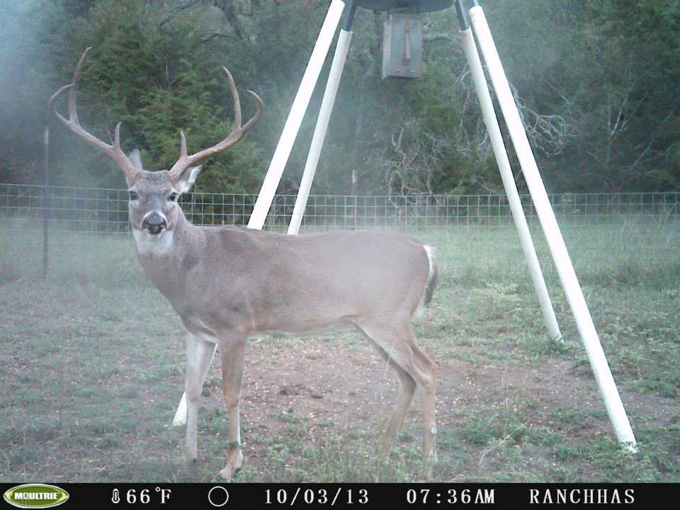 trail cam deer texas