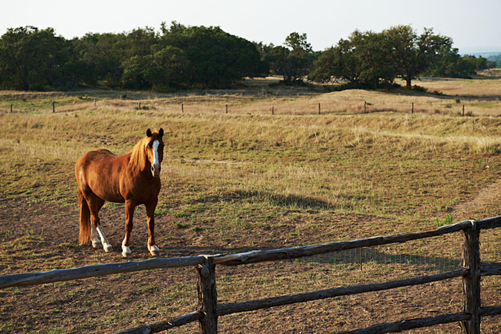 texas ranchland with horses